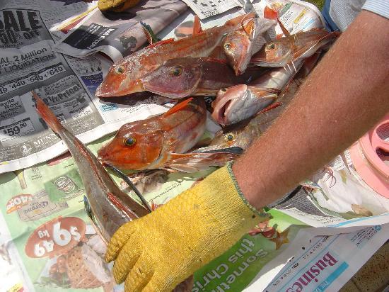 Vista del Sol: Fresh Fish for Dinner