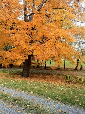 Charlton Farm Inn: beautiful fall colors along the driveway