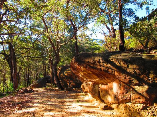 Spicers Sangoma Retreat: bush walk