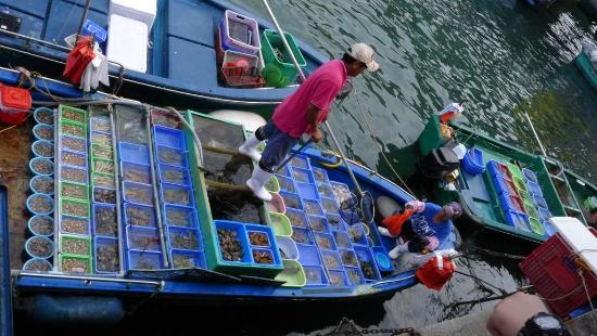 Sai Kung: Local fish sellers along the promenade