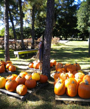 Long & Scott Farms Pumpkin Patch