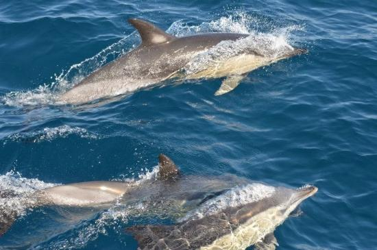 Lagos, Portugal: Dolphins 'days of adventure'