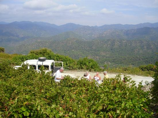 Atlantica Bay Hotel: Scrumping the grape vines