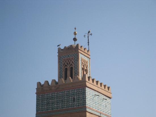 Riad Awa: ooievaars