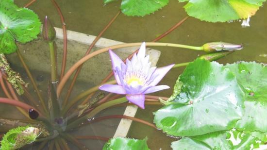 L'esprit de Naiyang Resort: wonderful