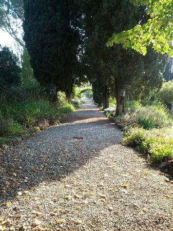 Tenuta di Ricavo: One of the lovely paths
