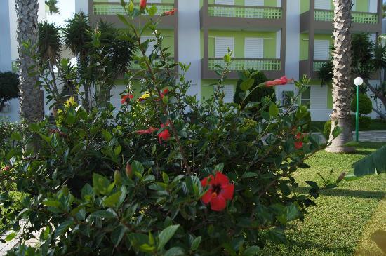 Giakalis Aparthotel: Всюду цветы