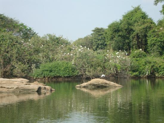 Ranganathittu Bird Sanctuary: A COUNTRY IN ITS OWN