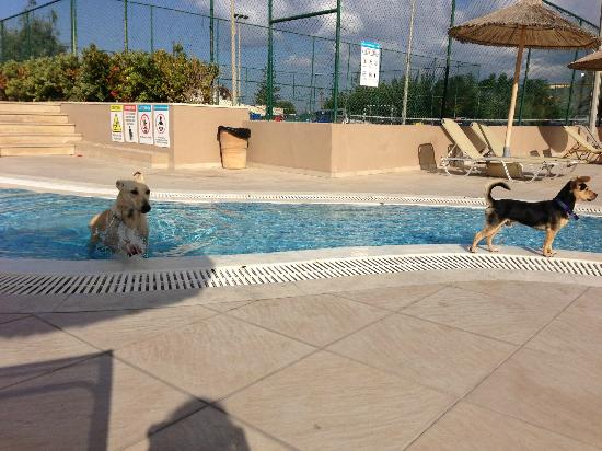 Beach Club Aphrodite: The children's pool, complete with swimming dog