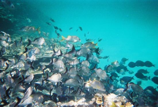 Al Natural Resort: Snorkelling nearby Al Natural