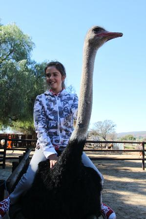 Safari Ostrich Show Farm: Brave girl riding the ostrich