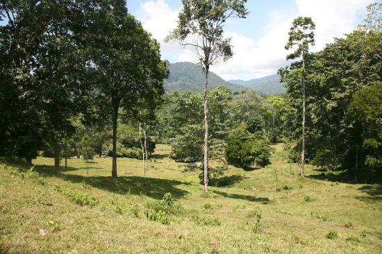 Selva Bananito Lodge: Selva Bananito Preserve