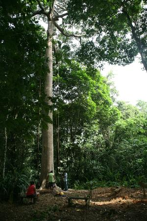 Selva Bananito Lodge: Tree climbing (introduction)