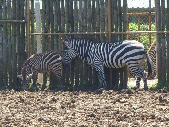 La Aurora Zoo: Zoologico Nacional La Aurora