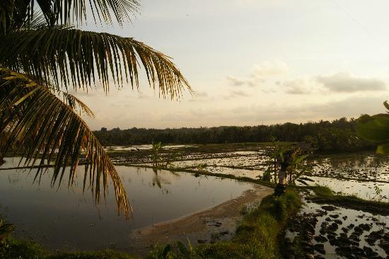 Omah Apik: View on the rice fields