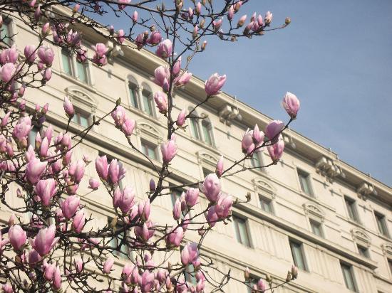 โรงแรมปรินซิเป ดิซาวอยอ์ มิลาน: Весна в Милане
