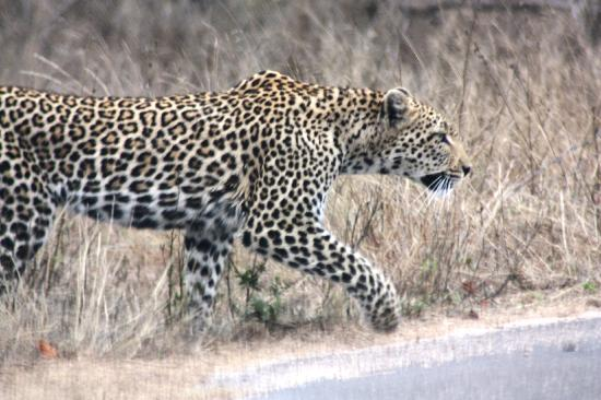 Flight of the Eagle Safaris & Tours - Day Tours 사진