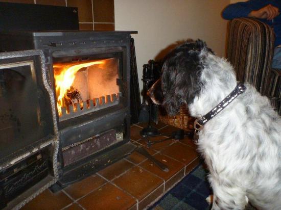 Kerrow House: Log Fire & mesmerised Spaniel