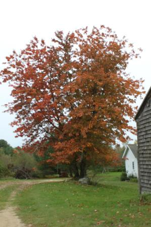 Olde Orchard Inn: Folige in front of the door!