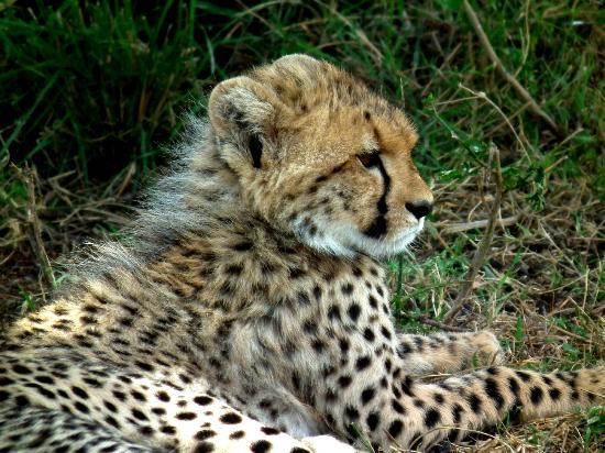 Serengeti Bushtops Camp: -