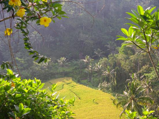 Villa Indah Ubud: View from our terrace
