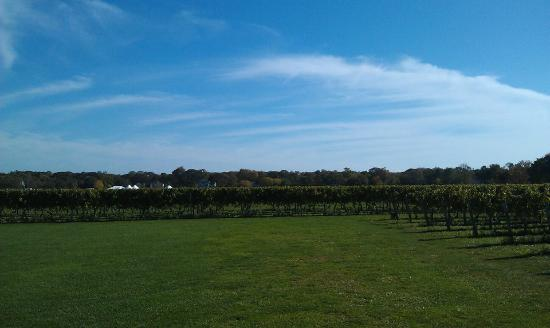 North Fork Wine Tours: Peconic Bay