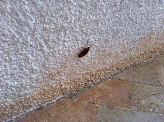 Savedra Beach Resort: one cockroach in the room