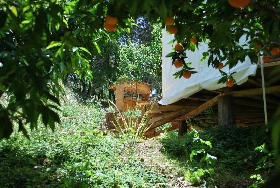 Cloud House Farm Yurt Holidays: The Orange Grove Yurt