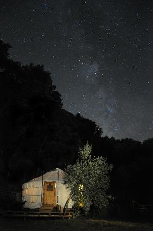 Cloud House Farm Yurt Holidays: Star gazing @ the Woodland Yurt