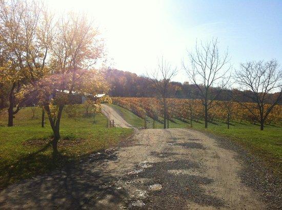 Weekend picture of niagara wine trail niagara falls tripadvisor