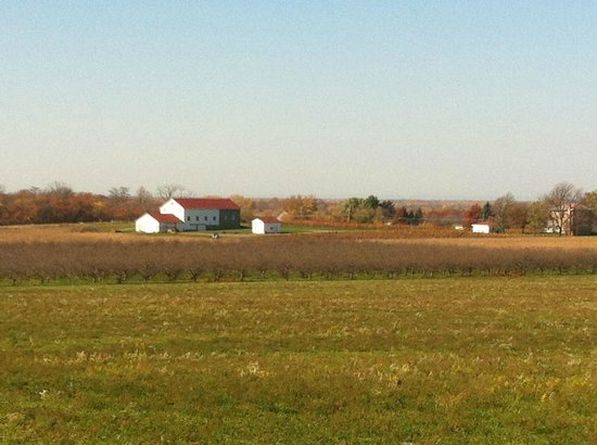 Niagara Wine Trail: Niagara farmland looking out toward Lake Ontario