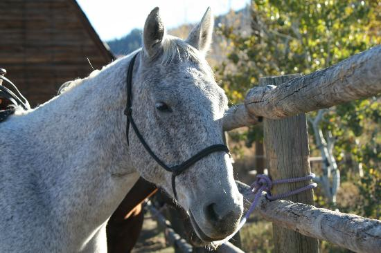 The Home Ranch: Beautiful horses