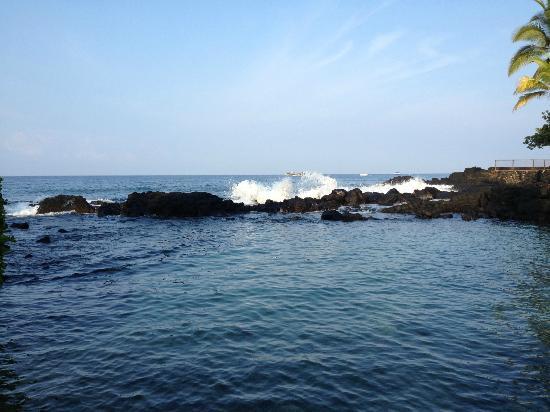 Royal Kona Resort: View from the beach at the lagoon
