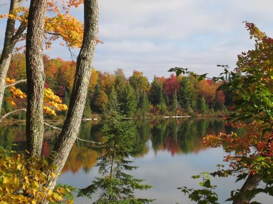 Halfway Lake Cottages: Fall color on Halfway Lake,