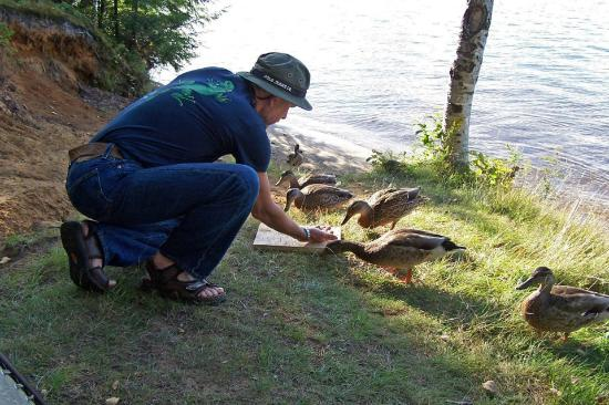 Fish Creek Pond Campground: Feed ducks @ your site.