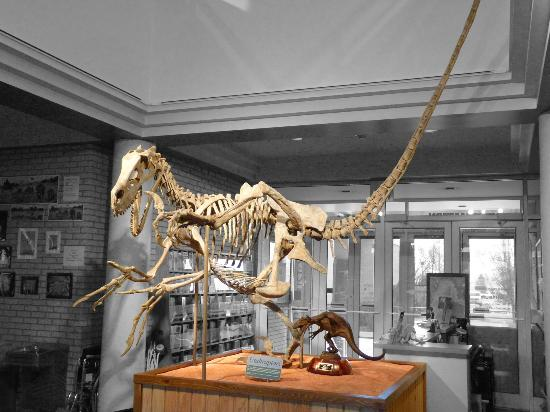 Utah State University Eastern Prehistoric Museum