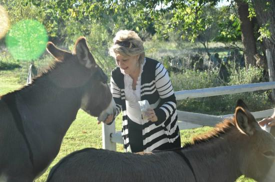 Settlers Crossing Bed and Breakfast: Feeding the SC donkeys