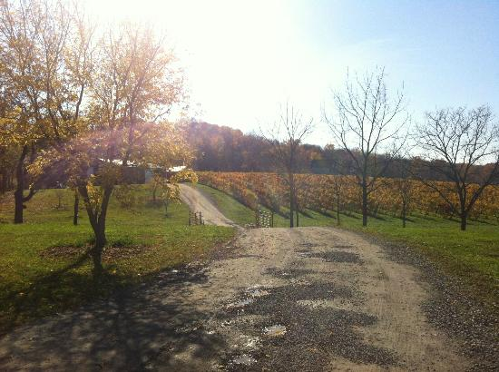 Niagara Wine Trail: Vinyard under the Niagara Escarpment