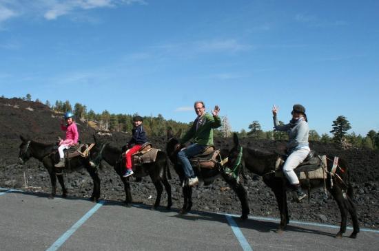 Etna Donkey Trekking: Leuk!