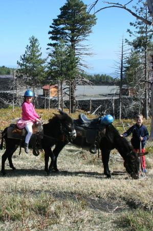 Etna Donkey Trekking: effe pauze