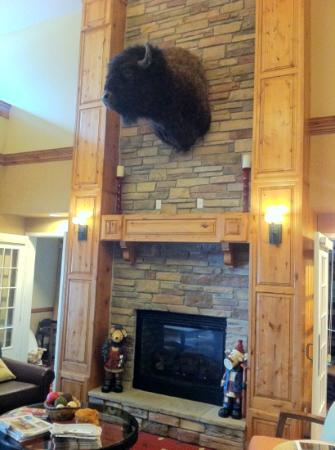 Best Western Plus Canyon Pines: The resident Buffalo