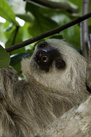 Hotel La Diosa: 3 toed sloth
