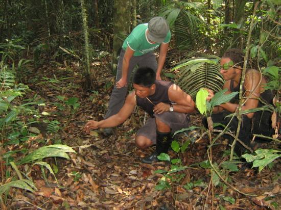 Amazon Tarzan Lodge: Mostrando alguns segredinhos da selva, mas não vou contar o que foi ...