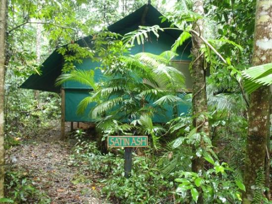 Daintree Crocodylus: One of our Rainforest Bungalows