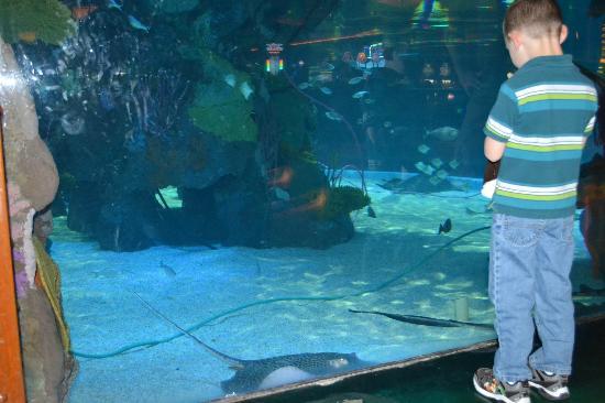 Silverton Hotel and Casino: aquarium