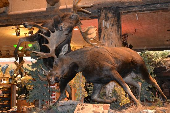 Silverton Hotel and Casino: moose in bass pro