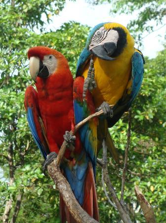 Cumaceba Amazon Lodge: Birds at the Animal Rescue Center