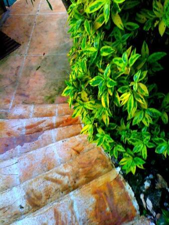 HunaHuna Resort: lush greenery