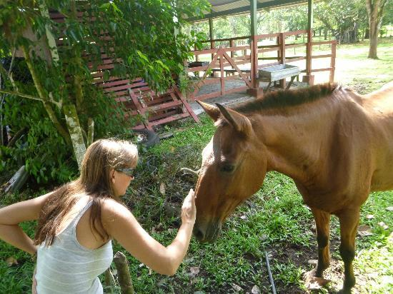 Tilajari Hotel Resort: Nice horse