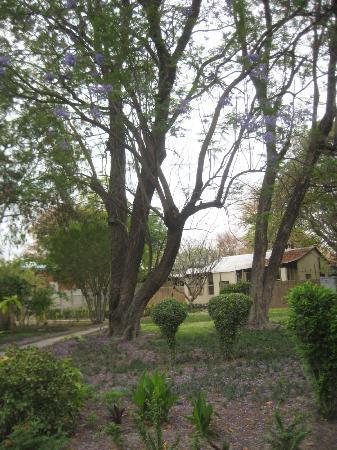 Cresta Riley's Hotel : Riley garden